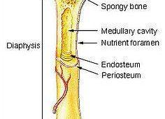 Osteologija DE 3