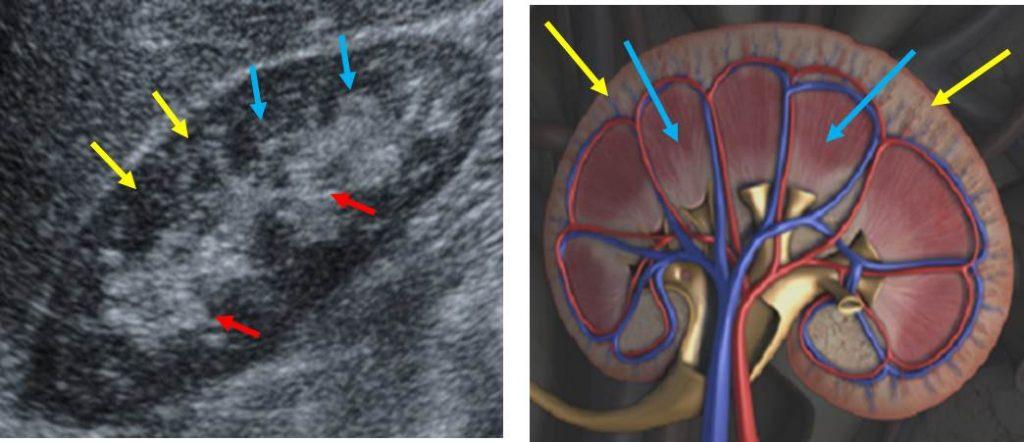 Ultrazvuk bubrega 2